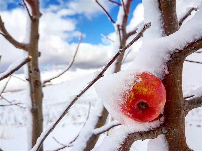 كل شيئ يتجمد في الشتاء الا الحنين...... روقان تصوير عدستي لبنان تلج شت