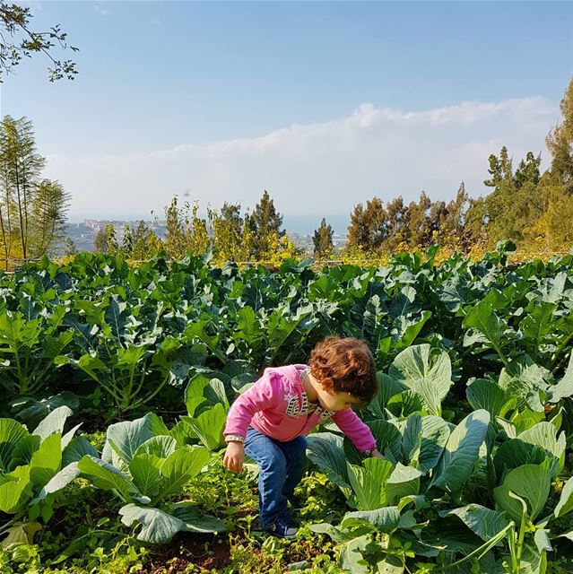 Kale, cabbage, cauliflower, broccoli and a cute little baby girl grow... (Joûn, Liban-Sud, Lebanon)