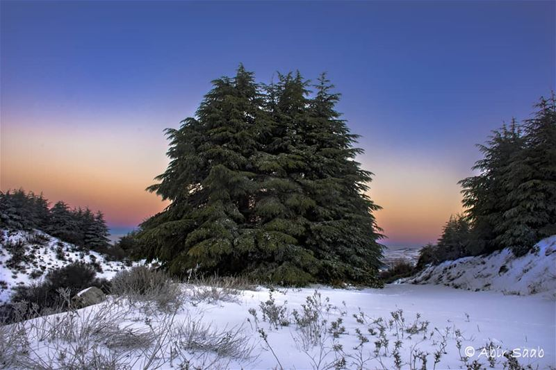 A sunrise over the Lebanese Cedars worth staying up to witness! lebanon ... (Al Shouf Cedar Nature Reserve)
