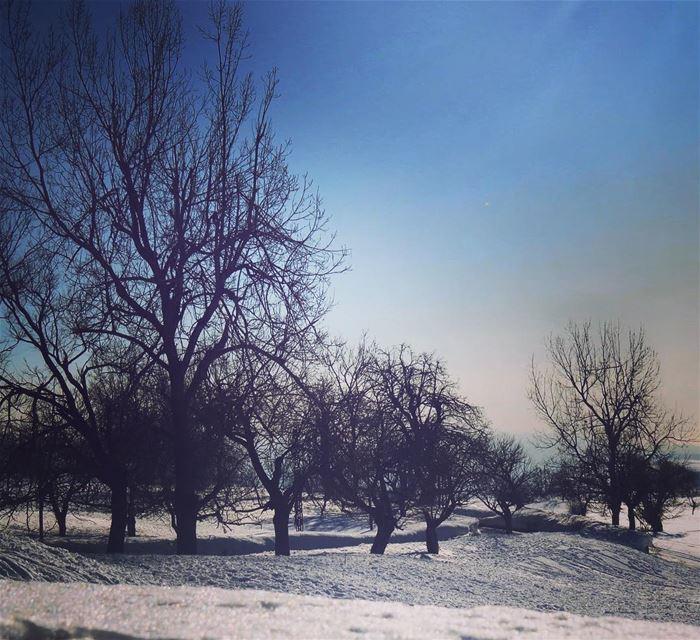 Trees dealing with snow ❄️❄️& cold ! 🇱🇧❄️❄️ sannine qanatbakish ... (Qanat Bakish, Mont-Liban, Lebanon)