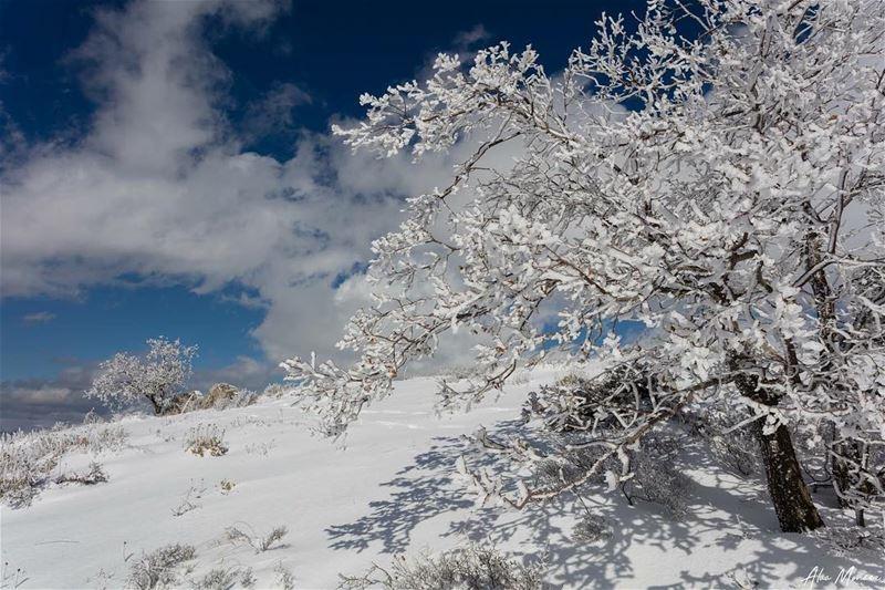 The white dress.. lebanon winter snow nature shouf trees canon ...