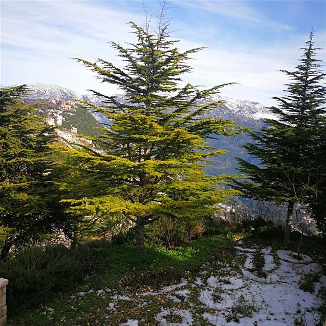 Grow Like a Cedar in Lebanon 🇱🇧 ig_worldclub ig_mood ig_lebanon ... (Annaya)
