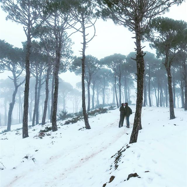 بالصّيف و بالشّتي 🌳👫🌫️❄️ fog hiking couple forest snow trees ...