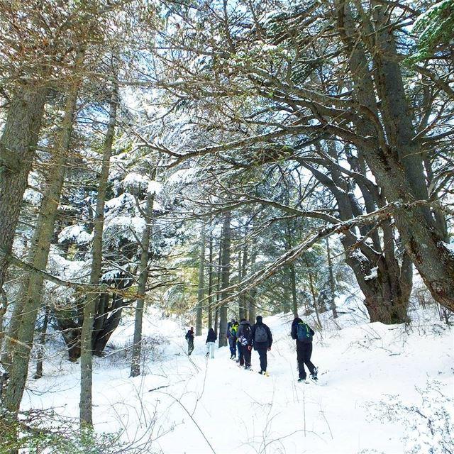 EXPLORE I Lebanon, Snowshoeing & Tannourine Reserve this Sunday🌲🌲🌲🌲 (Arz Tannoûrîne)