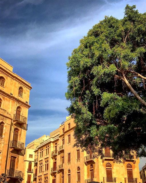 🌳 natureoftheplanet1 lebanoninapicture yourlifeoutdoors ... (Downtown Beirut)