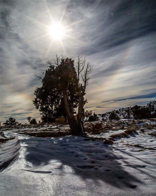 Lazzab....... nature colors shadow wild trees day snow ...
