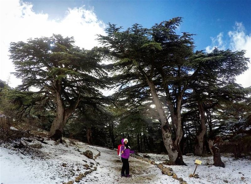 Hiking Barouk Cedars Lebanon 🌲❄️ girlswhohike hikergirl ... (Bâroûk, Mont-Liban, Lebanon)