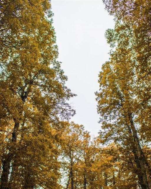 Tree tops 🌳🍁🍂 (غابة العذر)