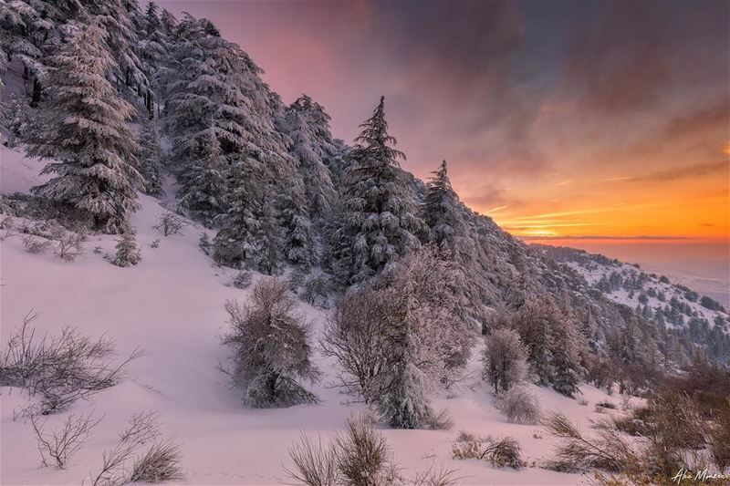Warm ending... snow nature shouf lebanon sunset sun trees cedar ...