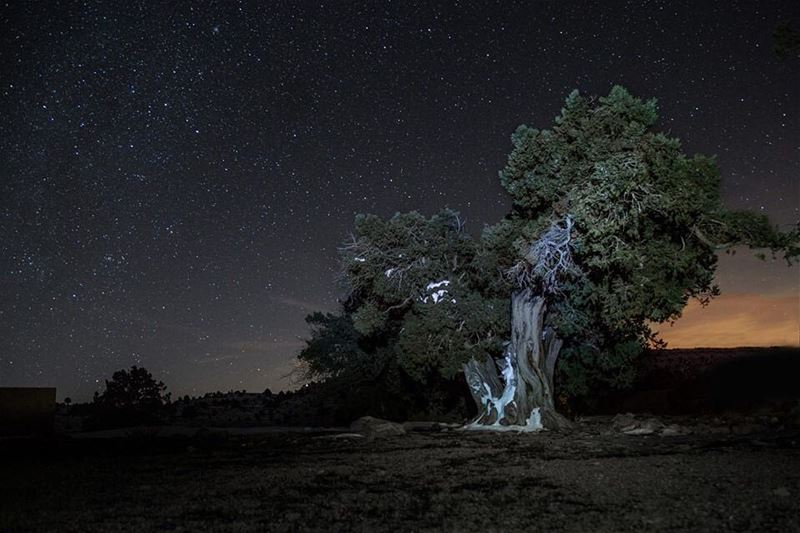 I stopped by this beautiful Juniper tree while I was wandering during the...