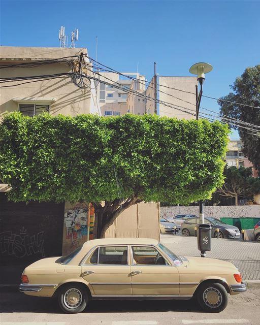 Beaters of Beirut (33) (Beirut, Lebanon)