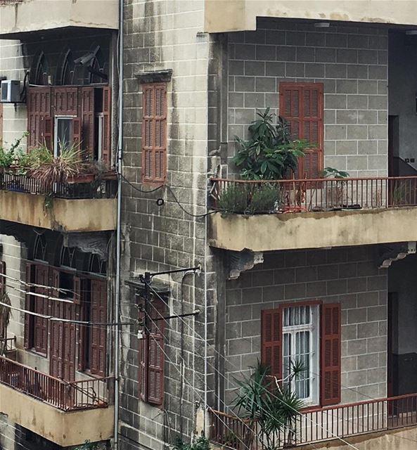 plant a little something 🌱 (Beirut, Lebanon)