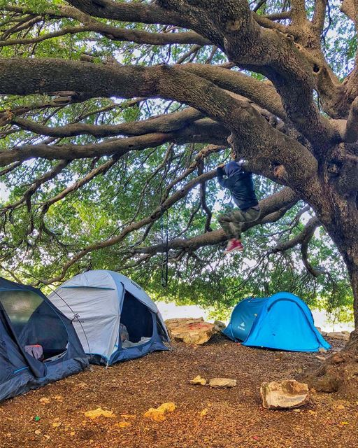 Monkey see monkey do!!..... camping nature naturephotography ...