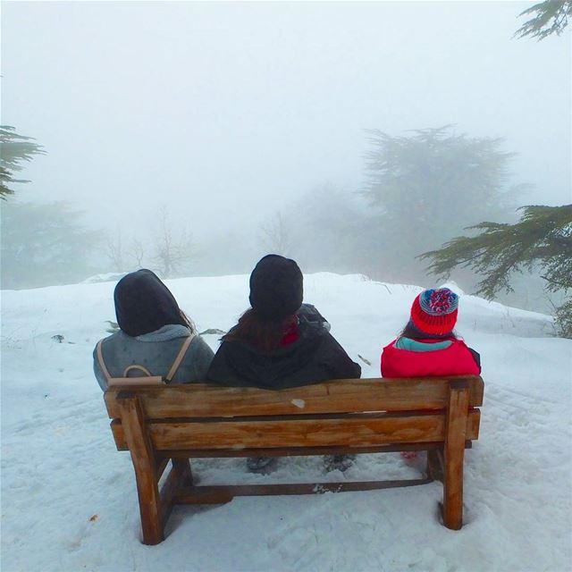 EXPLORE I Lebanon, Snowshoeing & Tannourine Reserve 🌲🌲🌲🌲🌲🌲🌲🌲🌲🌲� (Arz Tannoûrîne)