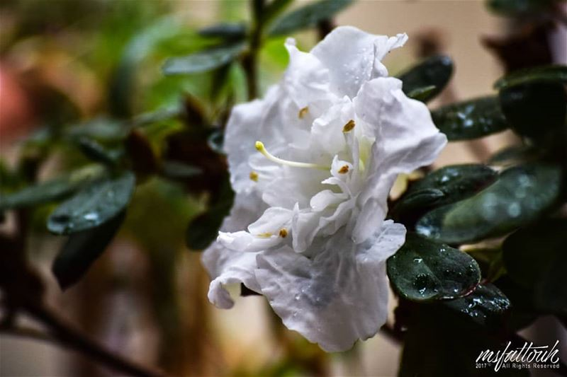"""""""Into each life some rain must fall."""" - Henry Wadsworth Longfellow..."""