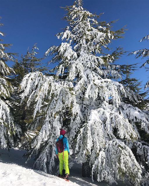 Snow tree ☃️❄️ (Mzaar Kfardebian)