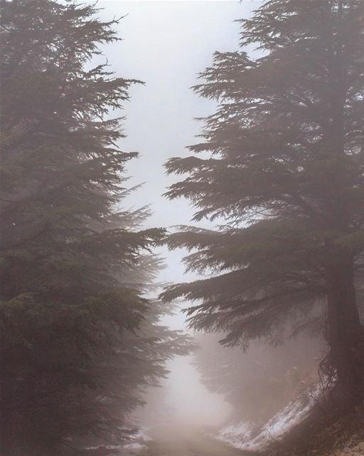 Lebanon cedars snow nature landscape lebanon_hdr loves_lebanon... (Al Shouf Cedar Nature Reserve)