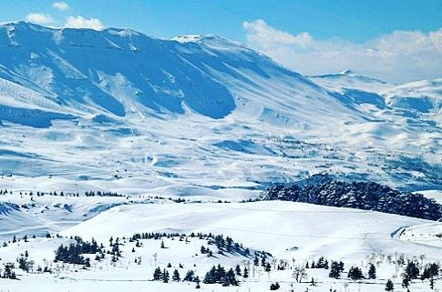 lebanon nature cedars snow picofday picoftheday planet planetearth ...
