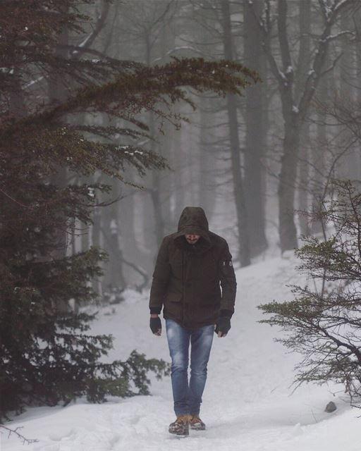 Winter feels....... hike outdoors canon canon_photos 80d ... (Cedar Reserve Tannourine)