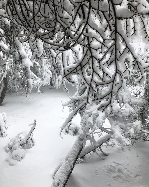 Natural snow sculptures 😍 (Arz el Bâroûk)