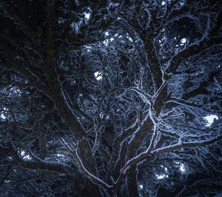 Under the cedar ... (Arz el Bâroûk)