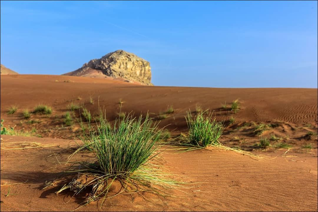 ALIVE.A composition in Dubai desert illustrating the strength of life in... (Dubai, United Arab Emirates)