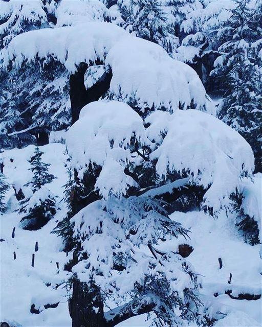nature lebanon winter instagood instagram instagoodmyphoto explore ...
