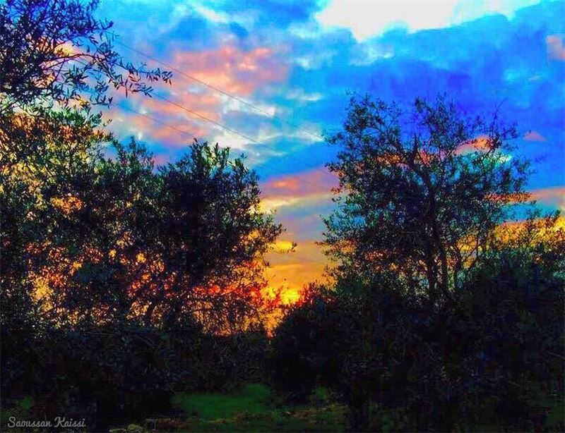 sunset colors nature landscapephotography trees sky clouds ...