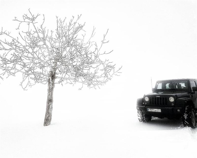 As vulnerable as love, as cold as death... lebanon snow theimaged ...
