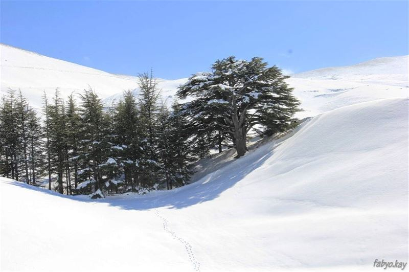 Have a nice evening from lebanon / cedars... (Cedars of God)
