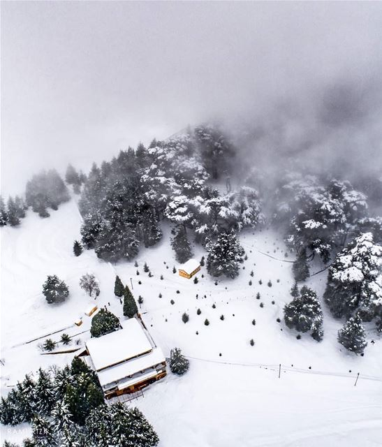 Foggy Forest❄️... cedars northlebanon lebanon dji drones ... (Cedars of God)