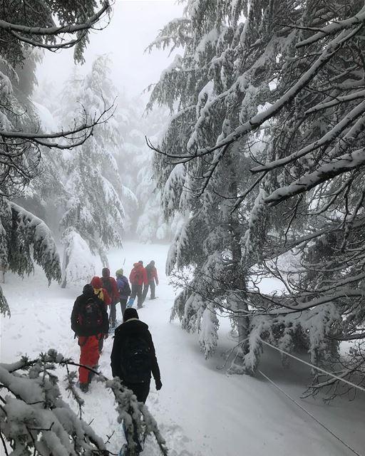 Snow paradise 😍 (Arz el Bâroûk)