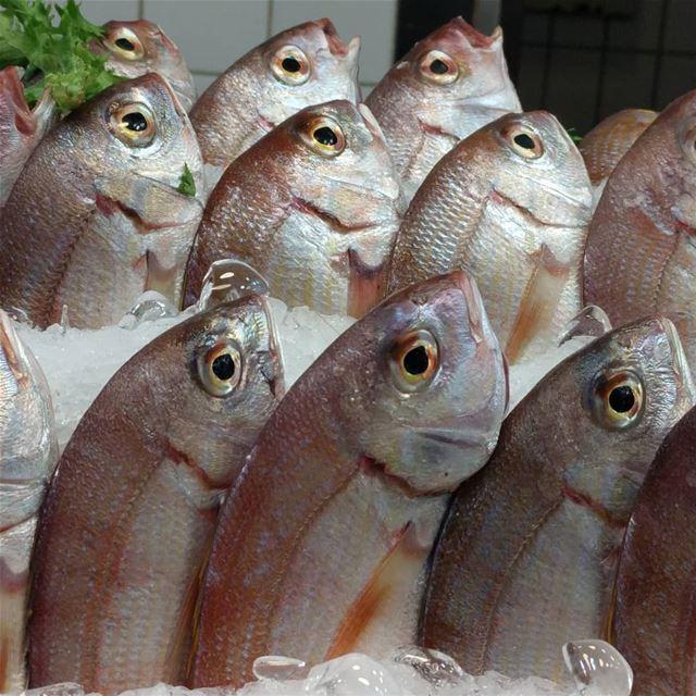 fish fresh seafoodlover seafood mediterraneanfood yummy ...