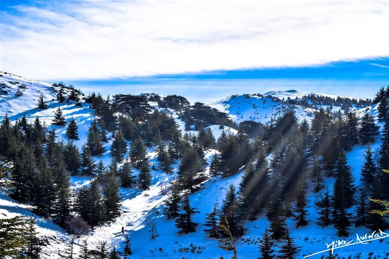 Feel the peace... beautiful barouk lebanon snow winter photography ...