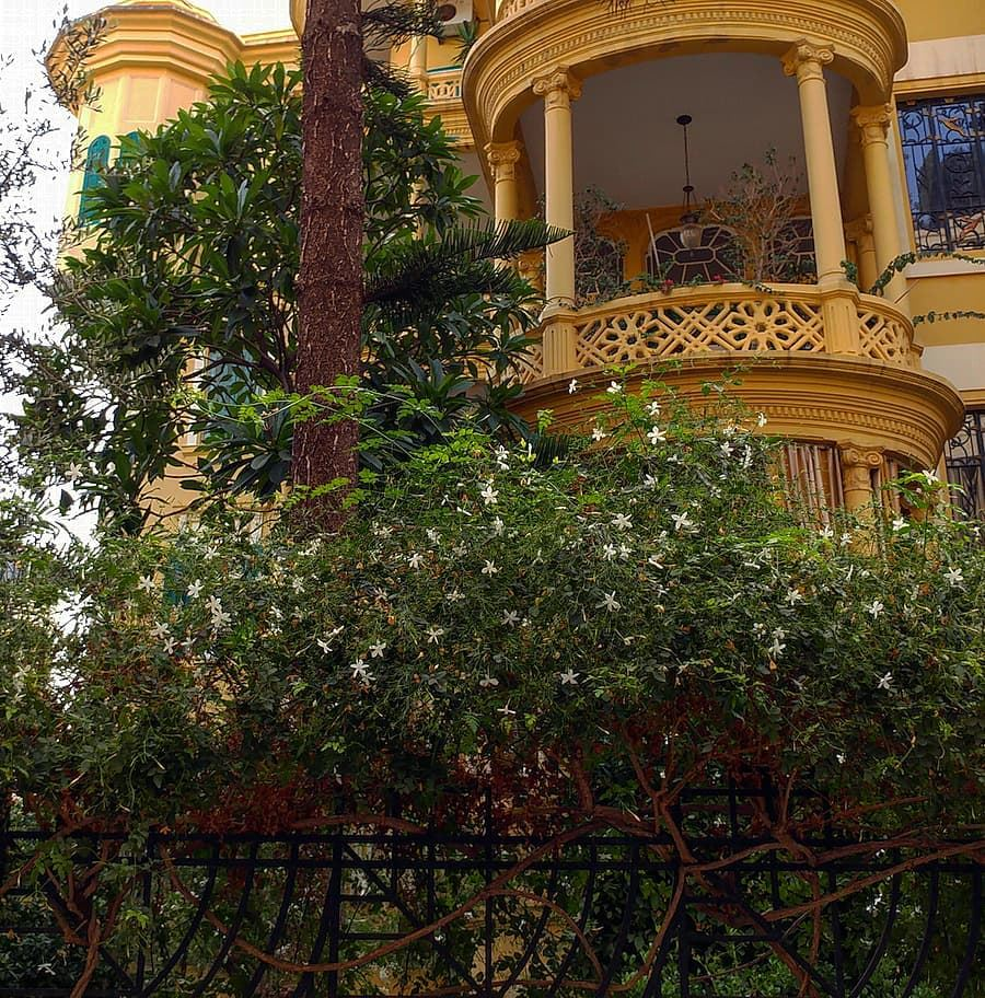 View looking into one of the last stately Beirut properties with its palm... (Beirut, Lebanon)