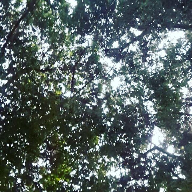 في غابة الباطون بيروت، مئات العصافير التجئت لشجرة واحدة، ولكنهم يرنمون، وير