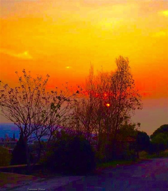 sunset colors winter trees colorfullsky sea streetphotography ...