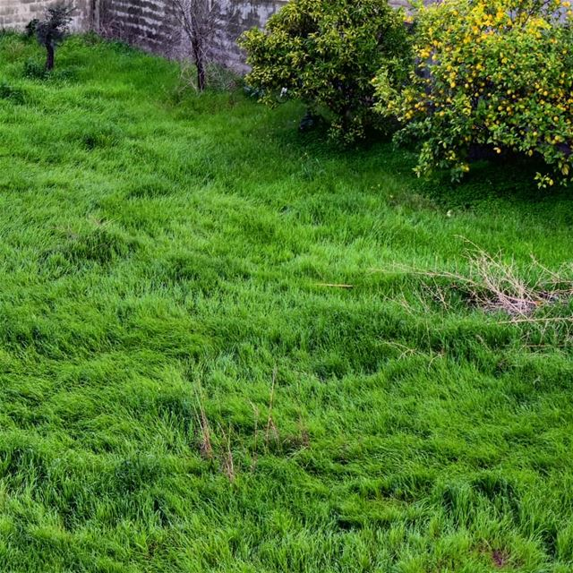 greengrass green liveloveamioun livelove.amioun lebanoninapicture ... (Amioûn, Liban-Nord, Lebanon)