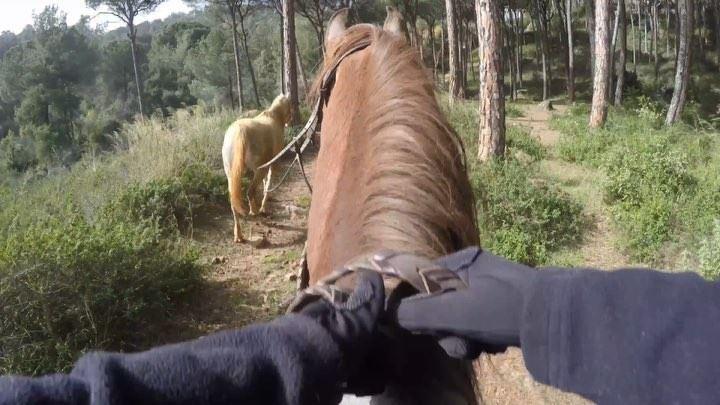 Horses make a landscape look beautiful 🏇🏼••••• horsebackriding ... (Beit Meri, Mont-Liban, Lebanon)