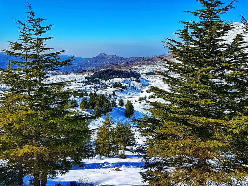 Through the trees landscapes cedars trees snow mountain ... (Cedars of God)
