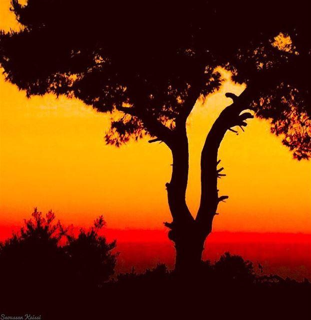 sunset colors trees beautiful ...