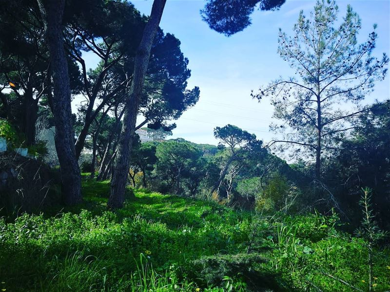 Lebanon 💚 grass  trees  pinetrees  sky  blueskies  green  mountains ... (Aïn Aalaq, Mont-Liban, Lebanon)