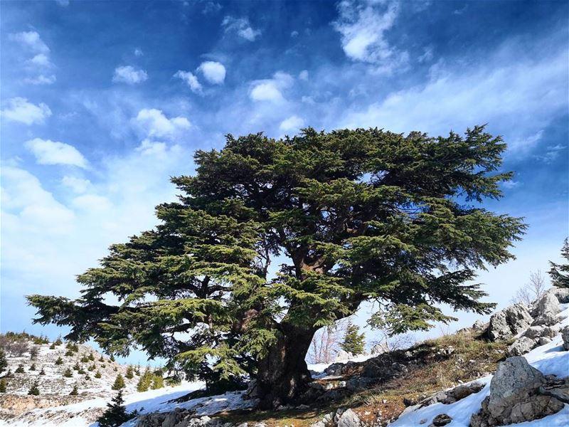 lebanon barouk cedars whatsuplebanon ptk_sky ptk_lebanon ...