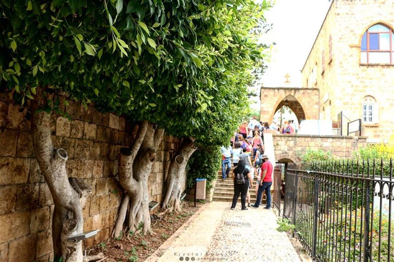 A la queue leu leu... 🌳 (Byblos, Lebanon)