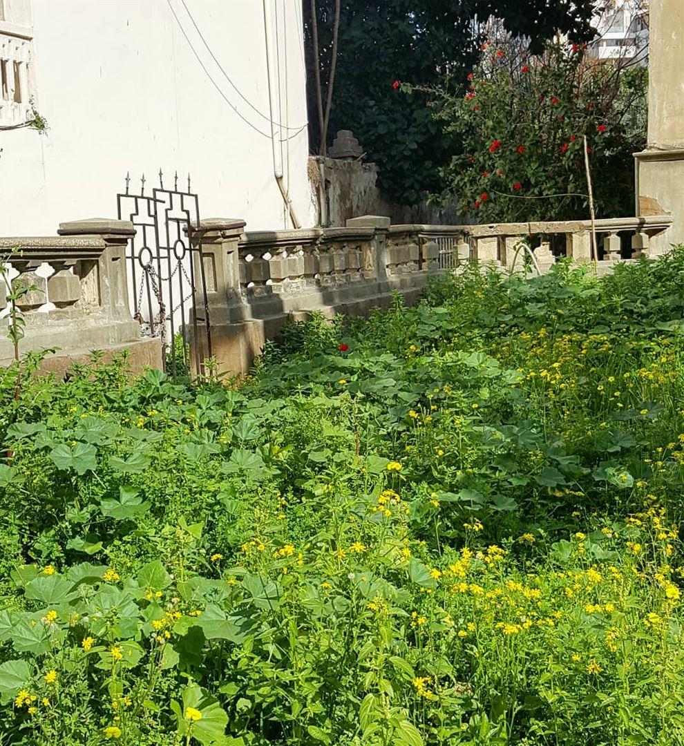 Precocious spring hiddenbeirut .......... Lebanon Beirut ...
