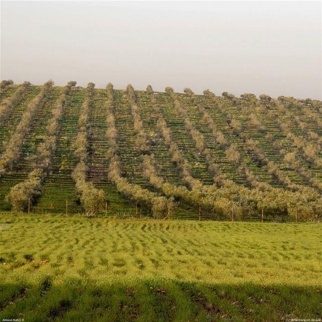 ".• "" Layers of Beauty ""• Location: Zawtar Village | Nabatiyeh District |..."