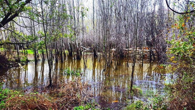 swamp  lake  Lebanon  nature  scenery  forest  photography  phoenicia ...
