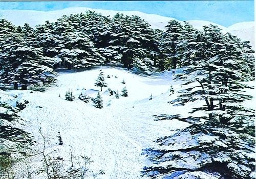cedars lebanon  nature  natureshot  naturezaperfeita  naturepic ... (Cedars of God)