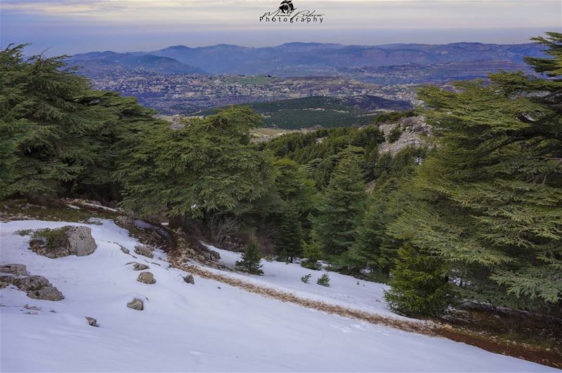 Good evening 😀🌲 chouf shoufreserve lebanon beirut livelovelebanon ... (Al Shouf Cedar Nature Reserve)