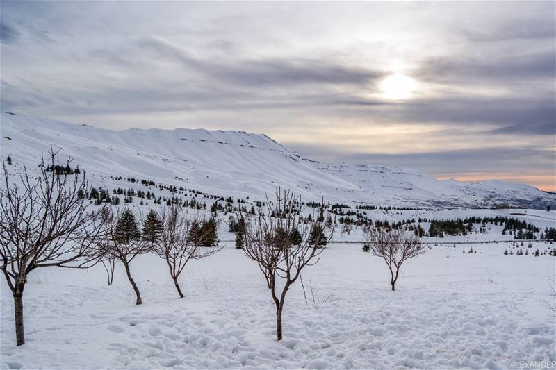 Winter landscape, Arz Bcharre, Lebanon livelovebcharre | Good evening all! (Arz Bcharé)